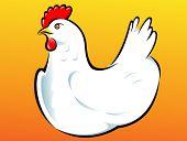 White Hen Vector Illustration