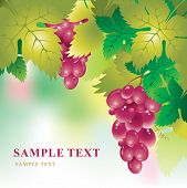 Soft vector background with a bunch of grapes and grape leaves
