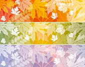 background with autumn leaves, wonderful elements to your design