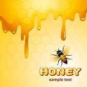 stock photo of creeping  - Bee on honeycomb - JPG