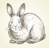 picture of rabbit year  - new year rabbit drawing - JPG