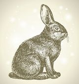 new year bunny beautiful drawing