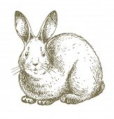 white Easter bunny illustration - JPG