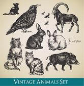 Vector animals set - raven, cats, flying birds, rabbits, boar, goat