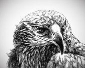 Adler Kopfleiste Kunst