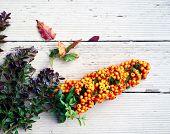 Beautiful Autumn Still Life With Hippophae Rhamnoides, Hippophae, Sea Buckthorn. Nice Medicinal Berr poster
