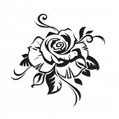 picture of white roses  - black rose on white background - JPG