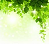 stock photo of green leaves  - Summer branch with fresh green leaves - JPG