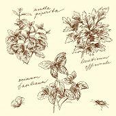 herbal-hand made drawing