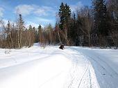 Maravillas del invierno