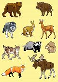 Set Of Europe Wild Animals