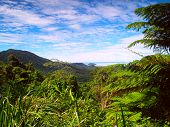 Beautiful View Over The Rainforest