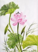 Watercolor Painting Of Lotus Flower