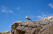 Bird on the rock