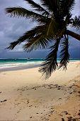 Espuma do mar nublado maconha no México