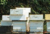 image of bee keeping  - Honey bee - JPG