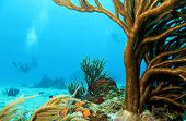 Corals and Divers