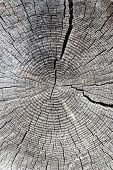 old log with tree-ring