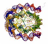 Nucleosome Core Particle Structure