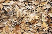 Dried Brown Leaves