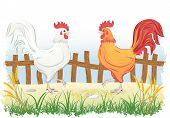 stock photo of bird fence  - Roosters in country side outdoor scene with fence - JPG