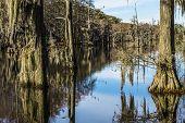Swamp Tree Moss