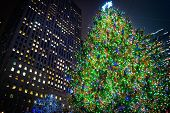 Tall Tree Rockefeller Center