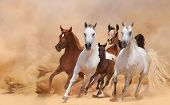 stock photo of sandstorms  - horse running in a sandstorm on a sunny day - JPG