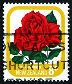 Postage Stamp New Zealand 1976 Josephine Bruce, Rose Flower
