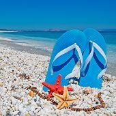 Sandals And Sea Stars