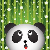 Panda and snow on bamboo background