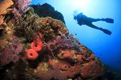 Scuba Diving on coral reef underwater