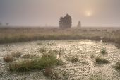 Sunrise Over Bog In Dense Fog
