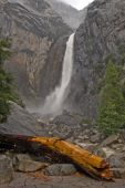 Fallen Tree at Waterfall