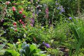 picture of english cottage garden  - English cottage flower garden in spring time - JPG
