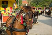 Carriages and horses