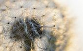 pic of blown-up  - blown dandelion flower head close up against the sky - JPG