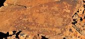 pic of eland  - Rock engravings at Twyfelfontein Namibia a World Heritage site - JPG