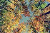 Autumn Tree Leaves - Instagram