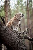 Dog On A Tree.