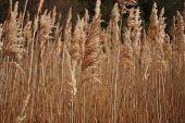 Coastal Grasses