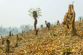 stock photo of slash  - Slash And Burn Cultivation - JPG