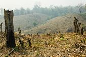 Slash And Burn Cultivation, Rainforest Cut And Burned To Plant Crops.