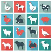 picture of husbandry  - Farm animals - JPG