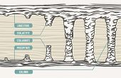 Vector illustration, stalactite, stalagmite, column, text