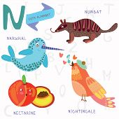 Very Cute Alphabet.n Letter.narwhal,numb At,nightingale, Nectarine.