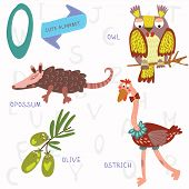 picture of opossum  - Alphabet design in a colorful style - JPG