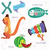 Very Cute Alphabet.x Letter. Xerus,x-ray Fish,xylophone,xigua