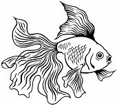 goldfish black white
