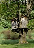 Wonderful Old Treehouse in the Country.